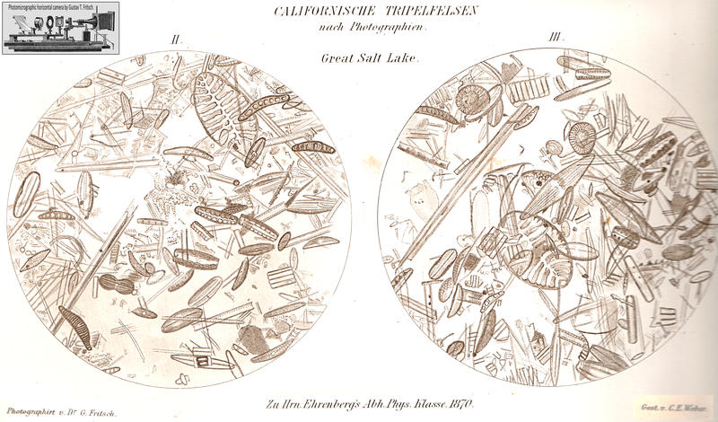 From Ehrenberg 1870: Microphotographs