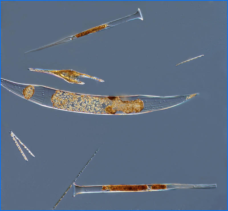 Plankton net tow (50 µm) material imaged using a 10x objective